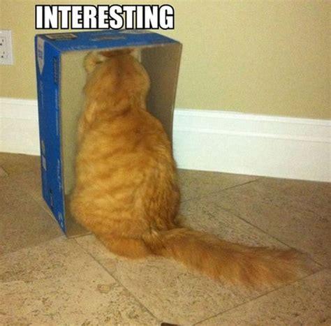 Cat Interesting Meme - interesting cat meme feels safe inside its box