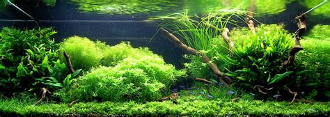 aquascape design jakarta hybrid theory aquascape indonesia koeng aquarium