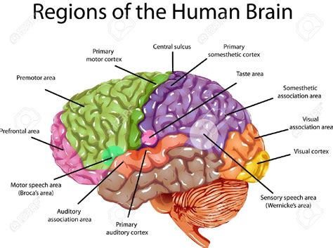 different sections of the brain seeking a predominant theory of mind dualism versus