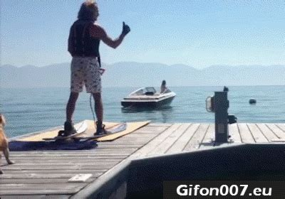 boat hits dog water ski fail gifs gif funny dog gifon007 eu all