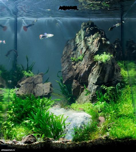 Aquarium Aquascapes by Best 25 Aquarium Aquascape Ideas On