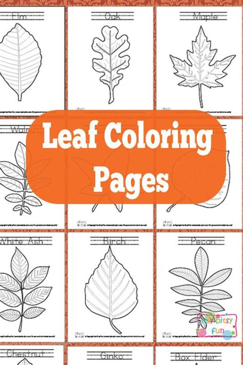 leaf identification coloring pages tree identification coloring pages best ideas for