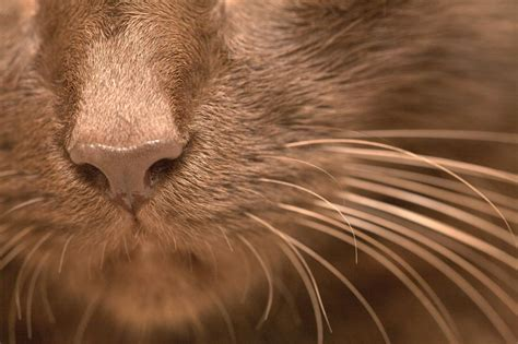 purpose of whiskers whiskers what does your cat use them for clear the air