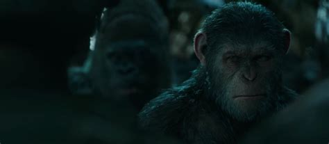 War For The Planet Of The Apes 2017 Dvd war for the planet of the apes 2017 free 720p bluray