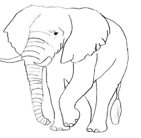 Dessin Coloriage Elephant A Imprimer