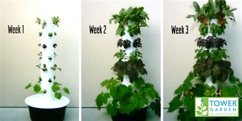 research backed benefits  aeroponic gardening tower