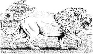 lion coloring pages lion coloring pages national