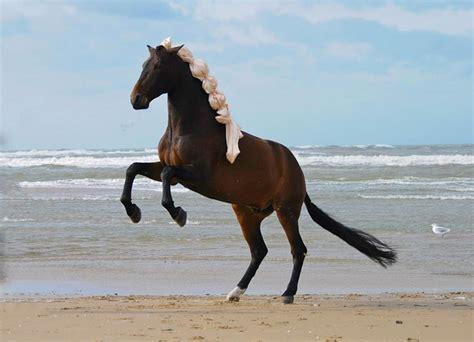 gratis paarden gratis foto paard steigerend paard paarden gratis
