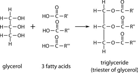 lipids ck  foundation