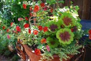 photo of different choices in container gardening ideas