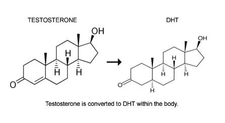 dht dihydrotestosterone what is dht s role in baldness what is dht its effects benefits and side effects low