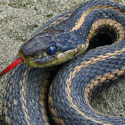 how to get snake out of house how to get rid of snakes how to get rid of stuff