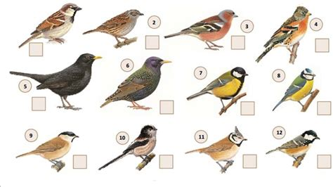 ce week end les oiseaux comptent sur vous 3