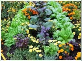 companion planting vegetable gardening plant companions