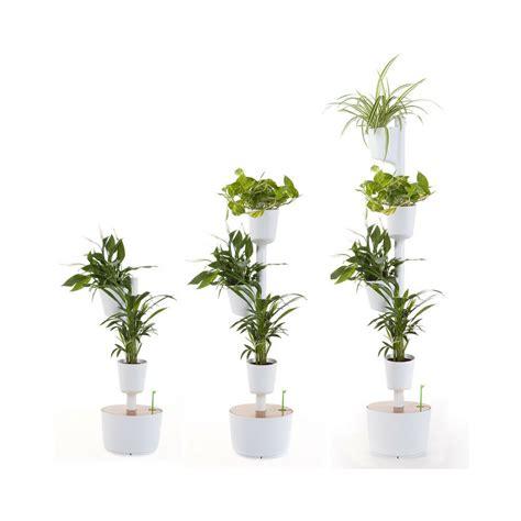 air plant vertical garden living wall vertical