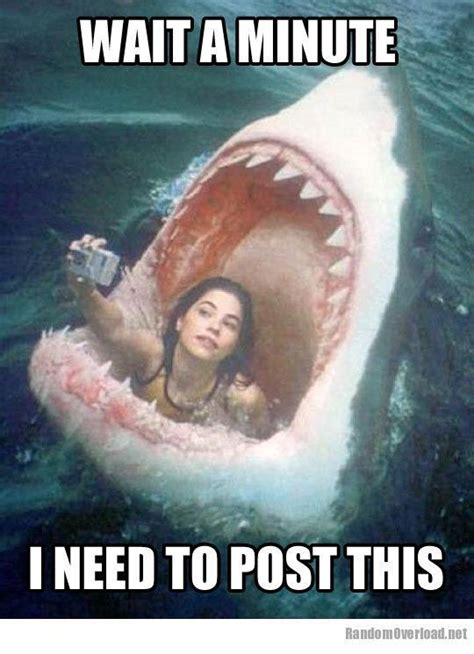 hot funniest 17 best funny selfie quotes on pinterest media quotes