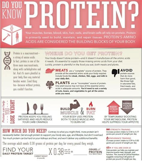 3 protein facts top 10 nutrition infographics you must see to learn