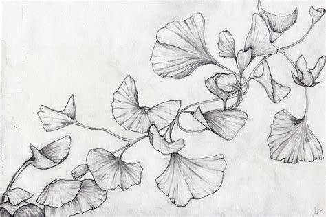ginkgo leaf coloring page ginkgo leaf drawing