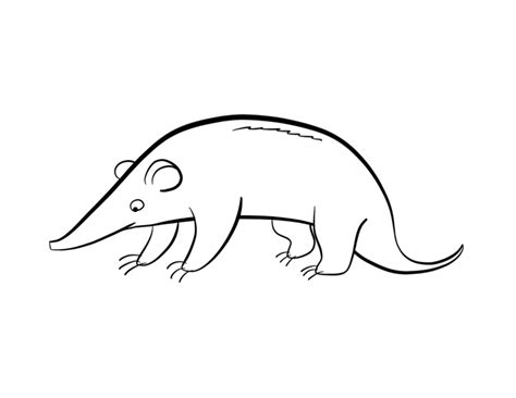 Anteater Coloring Page Colordad Anteater Coloring Page
