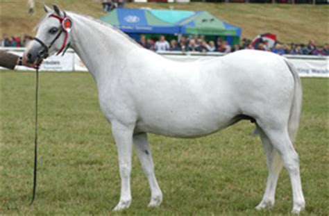 Section B Pony by Section A Nps Scotland