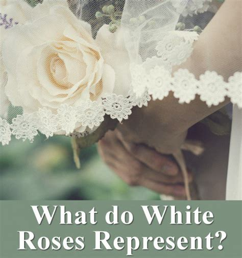 what does the color white symbolize all the different colors of roses and their meanings