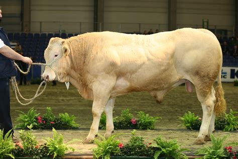 cattle breeds cattle breeds originating in the united states