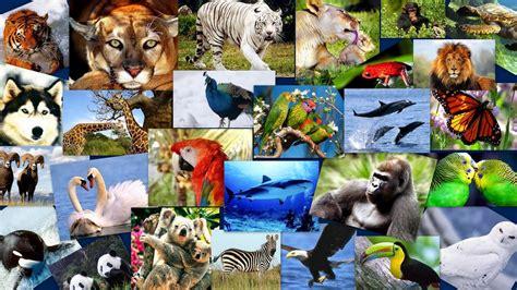 imagenes reino animal curiosidades que desconoc 237 as del reino animal parte 2