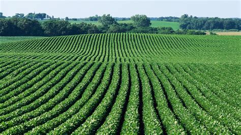 Can Soybeans Be Planted To Detox Land by Basf Deere Form Soybean Disease Fighting Incentive