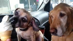 2 Dogs Eating Ice Cream Cone » Home Design 2017