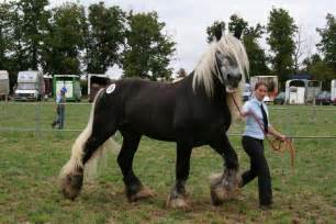 Draft Horse Village View Topic 2008 » Ideas Home Design