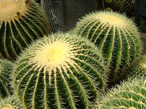cactus background 25 lovely hd cactus wallpapers