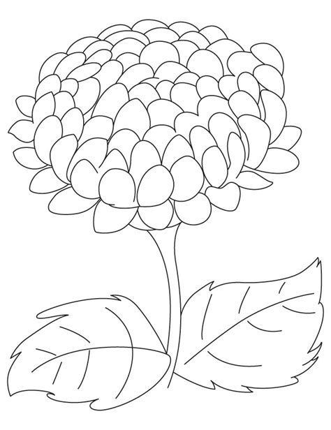 mums colouring book of chrysanthemum flower drawing sketch coloring page