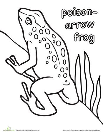 coloring page poison dart frog poison arrow frog coloring page worksheets frogs and arrow