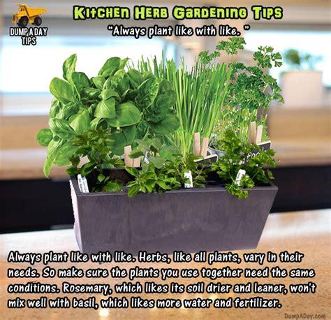 herb garden basics amazing kitchen herb garden tips 20 pics