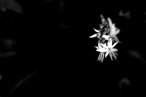 desktop wallpaper black and white flowers black and white flowers a4 hd desktop wallpapers 4k hd