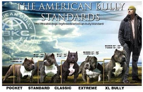 bully nation how the american establishment creates a bullying society books leps showdown kennelz american pitbull terrier puppies