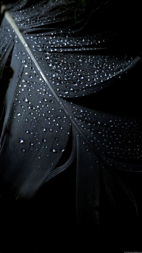 wallpaper for iphone 6 rain black feather rain drops iphone 6 plus hd wallpapers