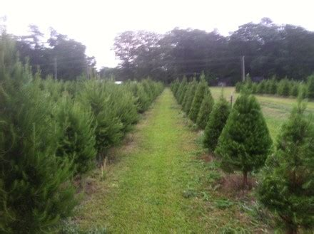 hours of operation hughes christmas tree farm