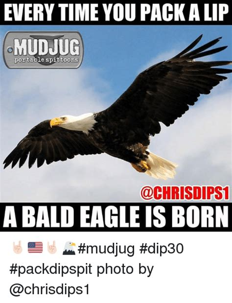 Bald Eagle Meme - 25 best memes about bald eagles bald eagles memes