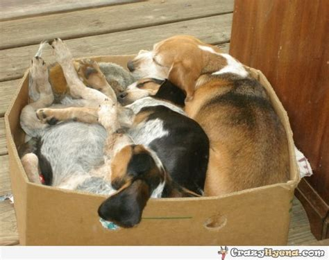 puppy in a box three dogs sleeping in a cardboard box