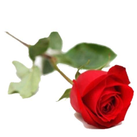 Fleur St Valentin by Fleurs Valentin