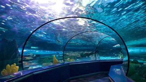 Ripley's Aquarium in Myrtle Beach, South Carolina   Expedia.ca