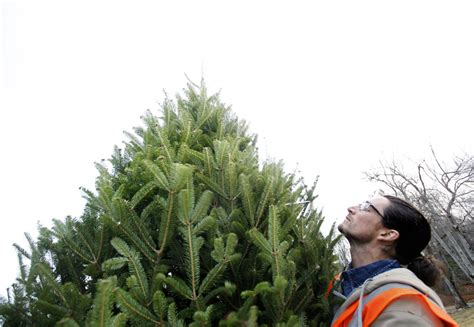 on the job a starring role at christmas tree farm