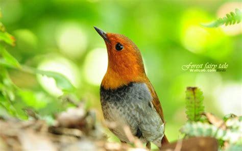 春天里可爱的小鸟壁纸壁纸 春天里可爱的小鸟壁纸壁纸图片 动物壁纸 动物图片素材 桌面壁纸