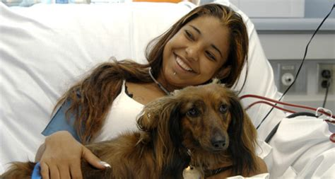 hospital dogs hospital therapy dogs helping those in need tag