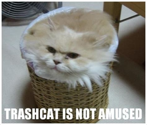 Lolcat Meme - the ultimate meme gallery lolcats