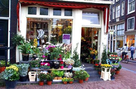 flowers flower shop flower pictures flower shops