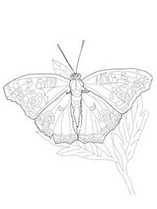 owl butterfly coloring page owl coloring pages butterfly mandala pictures to pin on
