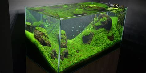 aquascape aquarium setup tutorial