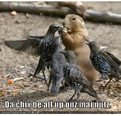 Funny Birds Animal
